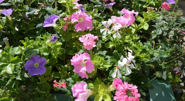 Une fleur pour Saint-Pierre d'Autils